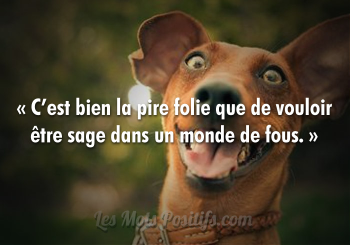 Lâcher son fou