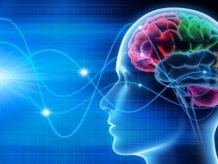 Hanbitude du cerveau