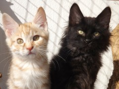 petit_chat
