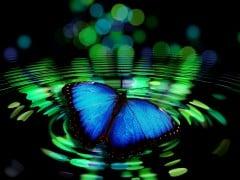 butterfly-492536_1280