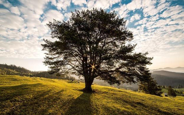 Eckhart Tolle : l'Art du calme intérieur