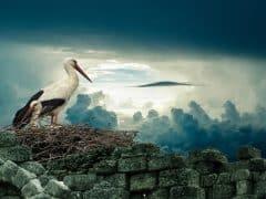 oiseau_nid