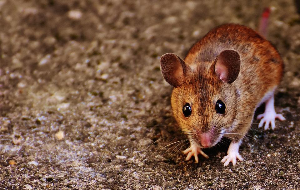 Citation L'homme qui croyait être une souris