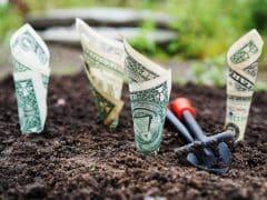 argent_plante