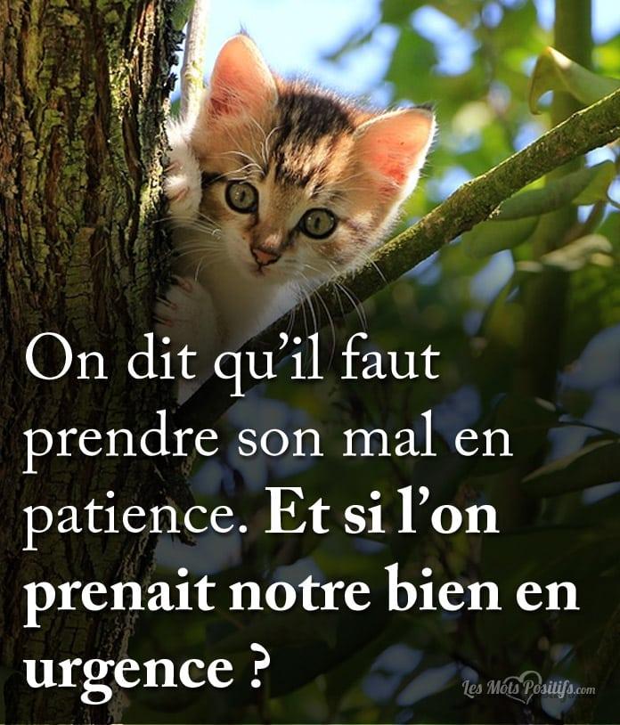 petit-chat-urgence