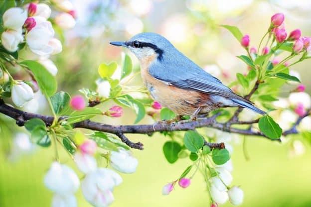 Les fleurs du printemps sont les rêves de l'hiver racontés