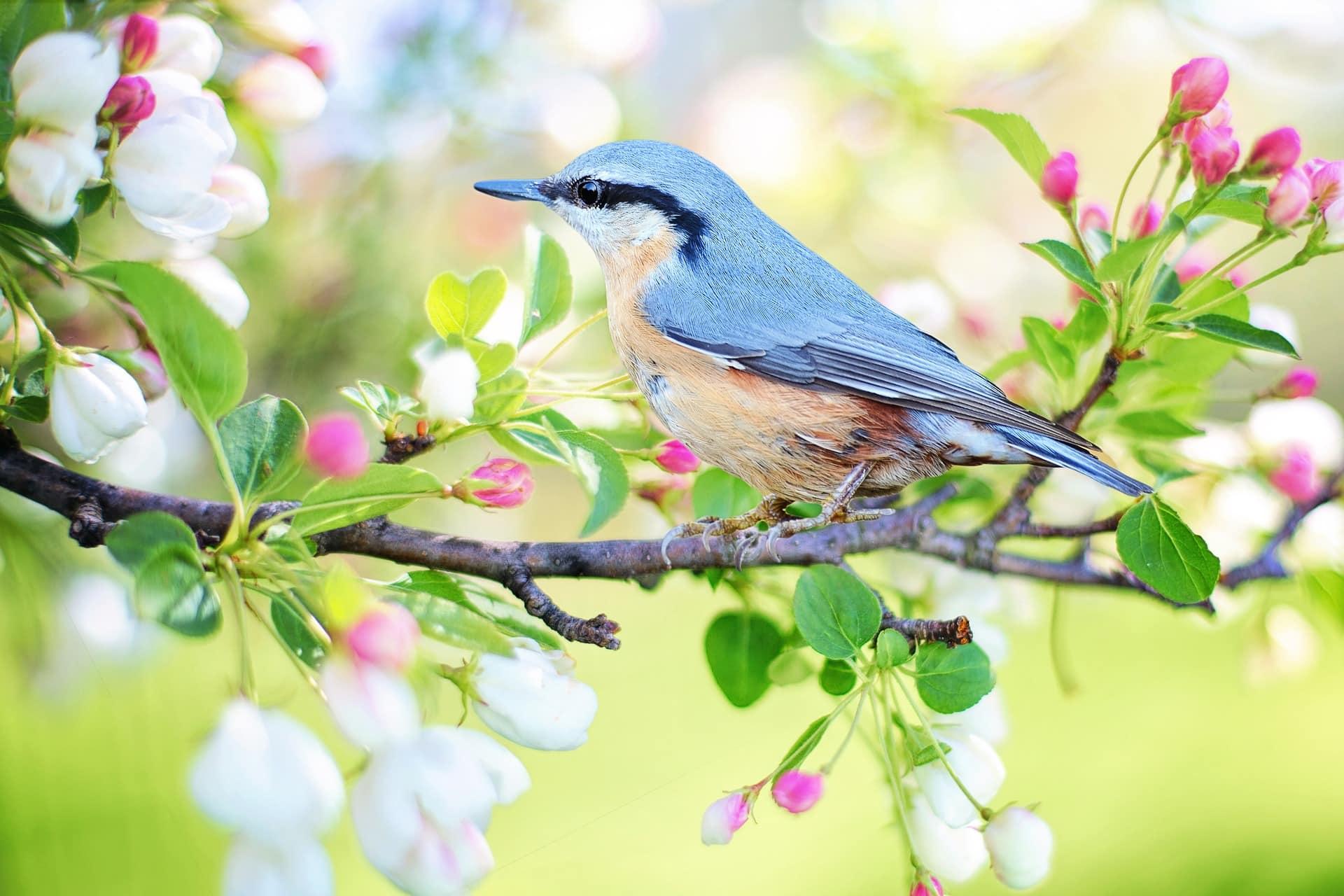 Citation Les fleurs du printemps sont les rêves de l'hiver racontés
