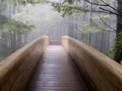 chemin vers le bonheu
