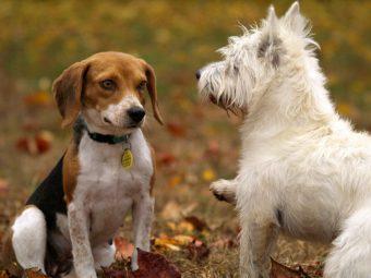 communication chiens