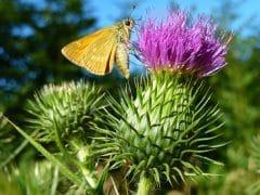 Fleur Papillon pour Livre