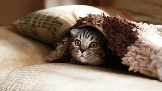 Citation Les chats vous protègent vous et votre maison des fantômes et des esprits négatifs