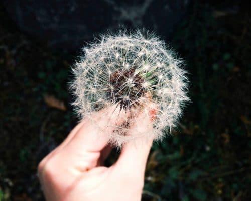 Les 4 étapes pour réaliser ses rêves