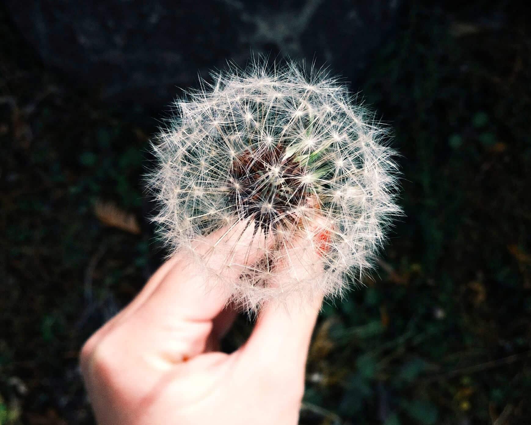 Citation Les 4 étapes pour réaliser ses rêves
