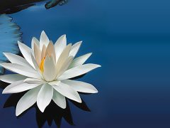 black-lotus-flower-wallpaper-full-hd-For-Widescreen-Wallpaper