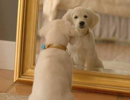 Citation La leçon du miroir