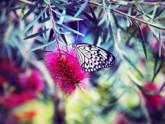 papillon_bonheur_livre