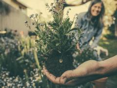 plantes-legales