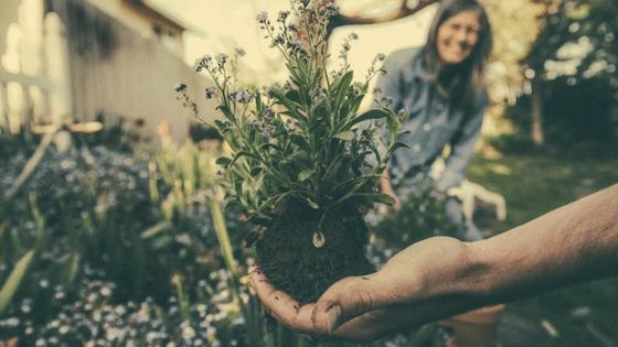 Citation 7 plantes légales qui peuvent modifier votre conscience et éclaircir vos rêves de façon spectaculaire