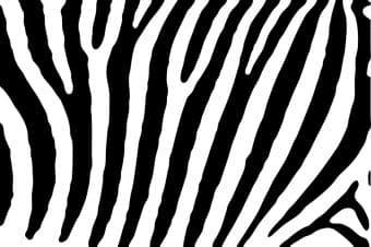 zebra-938706_960_720