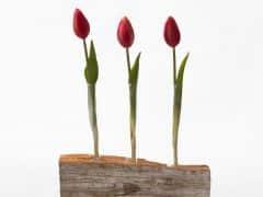 flower-3295551_1920