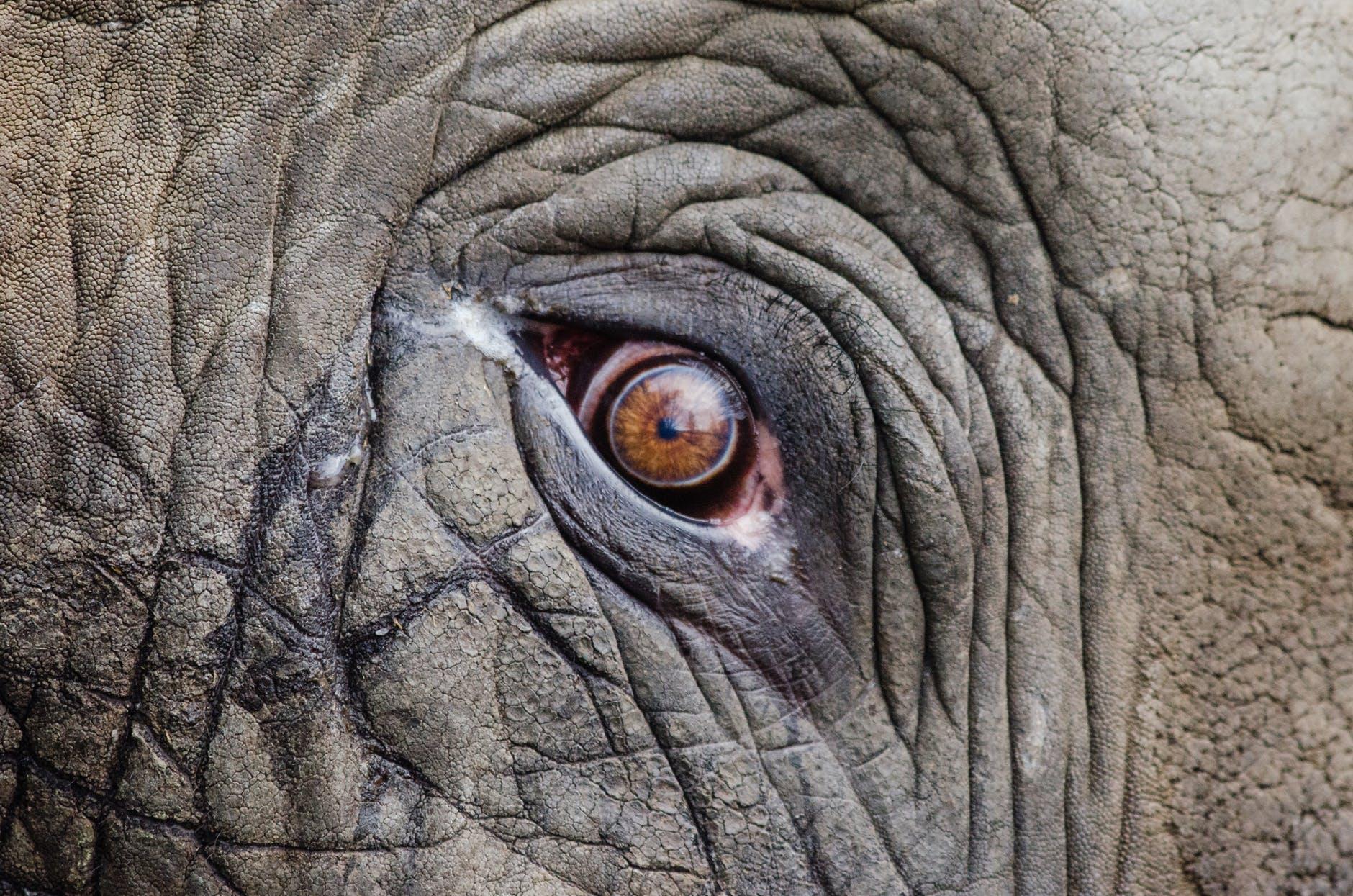 Citation L'éléphant, la cordelette et tes chaînes invisibles