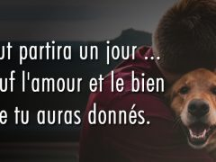 citation-tout-partira