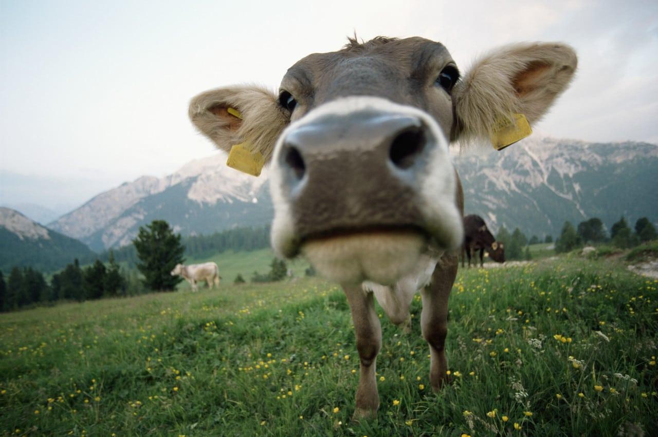 Citation Manger de la viande en conscience
