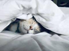 petit-chat-dormir