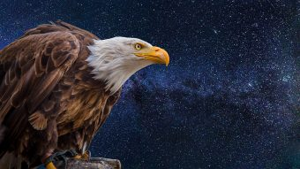 bald-eagles-2748972_960_720