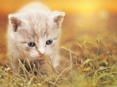 cat-1992140_1280