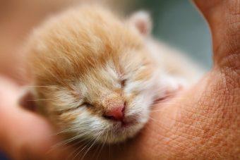 kitten-71514_1280