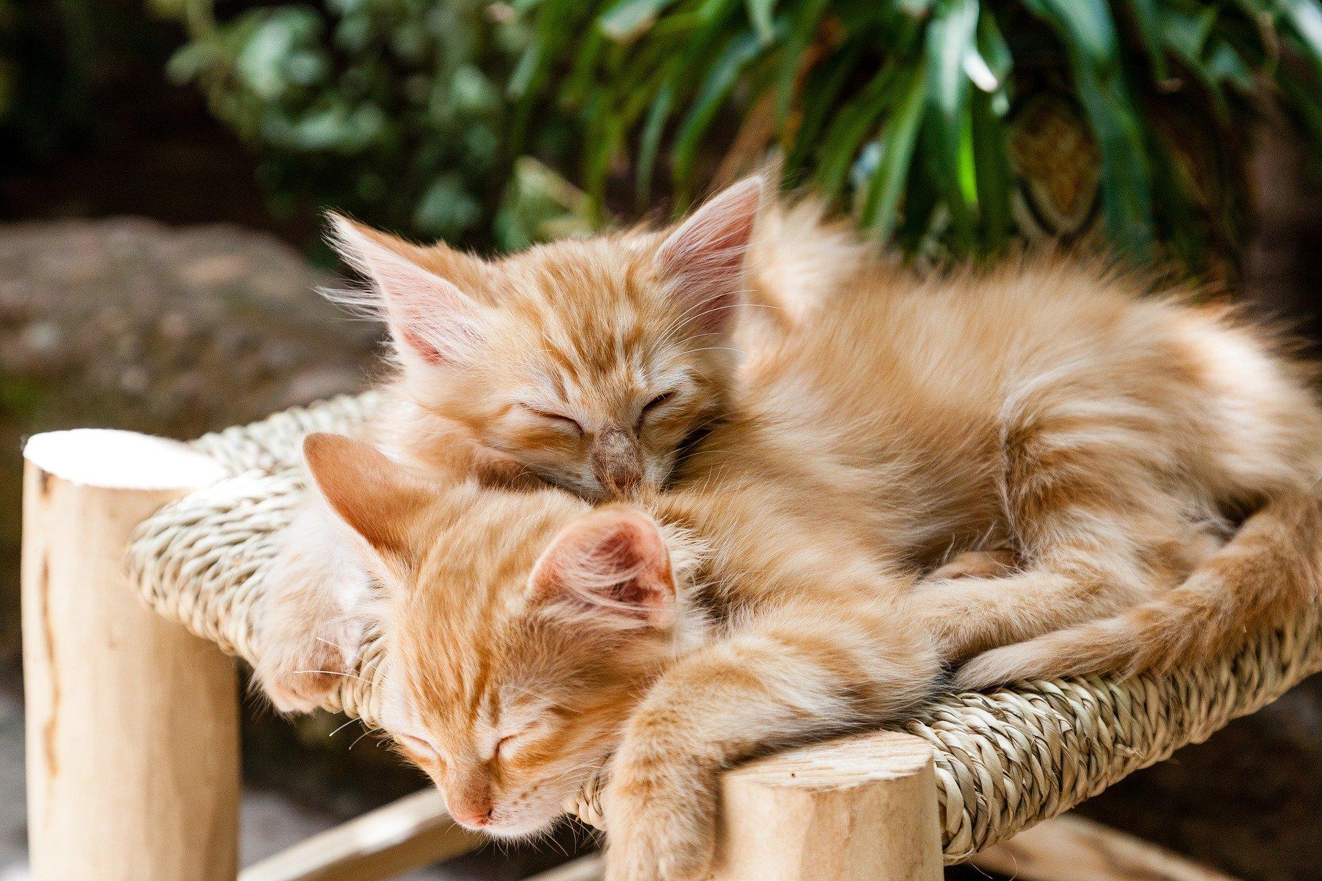 Citation 7 conseils pour vaincre l'insomnie et retrouver le sommeil