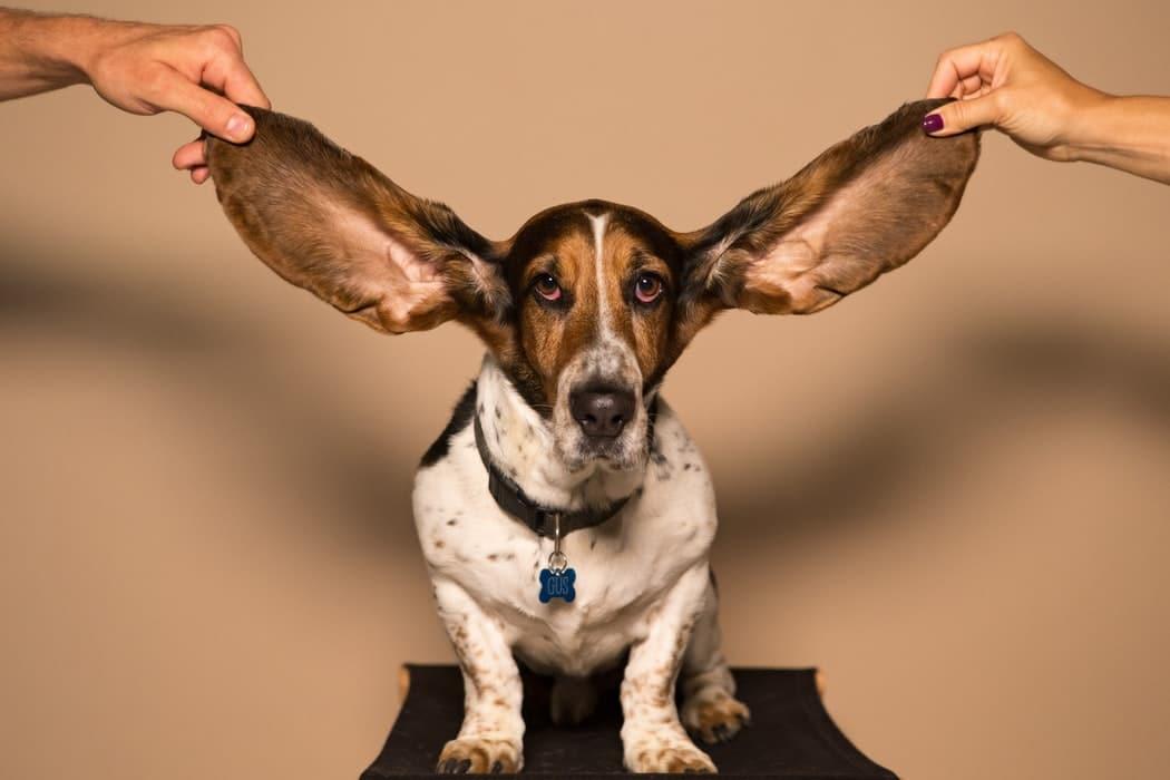Citation L'écoute active permet d'éviter les disputes et favorise notre vision de nous-mêmes.