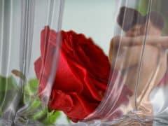 rose-2717785_960_720