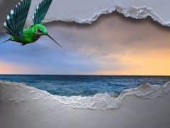 hummingbird-3347576_1920