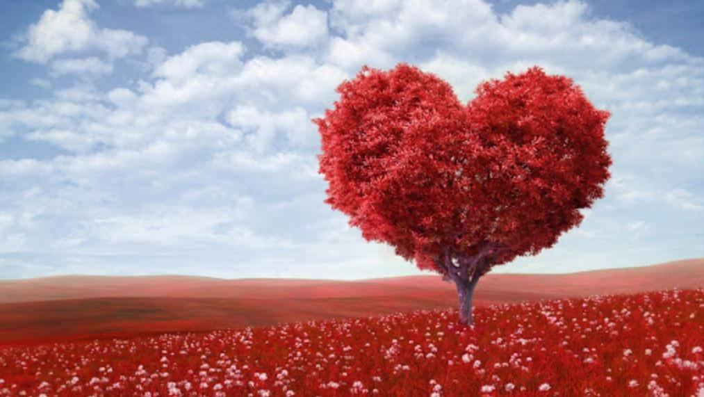 Citation Mettez de l'amour dans votre vie