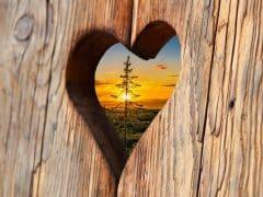 heart-2041866_1920