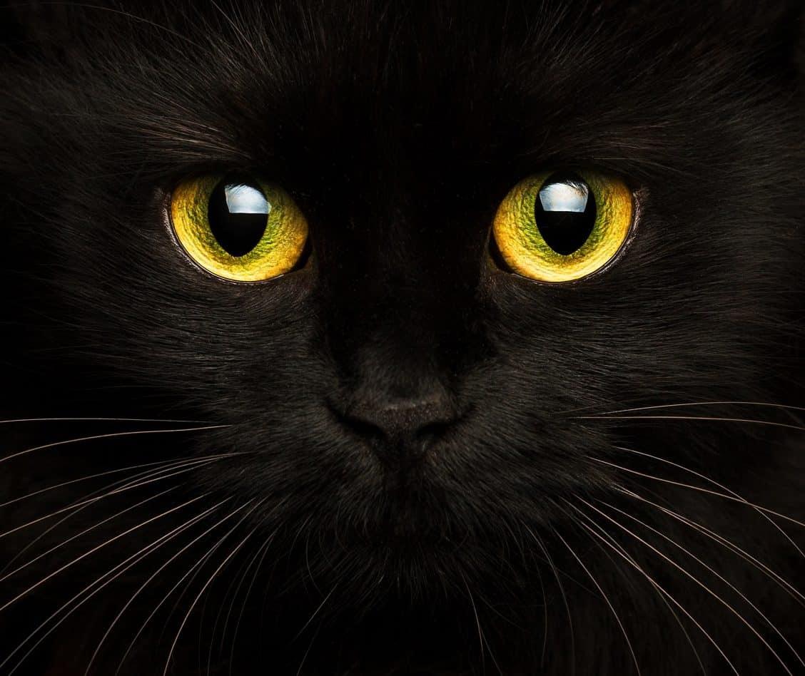Citation La spiritualité par les Chats