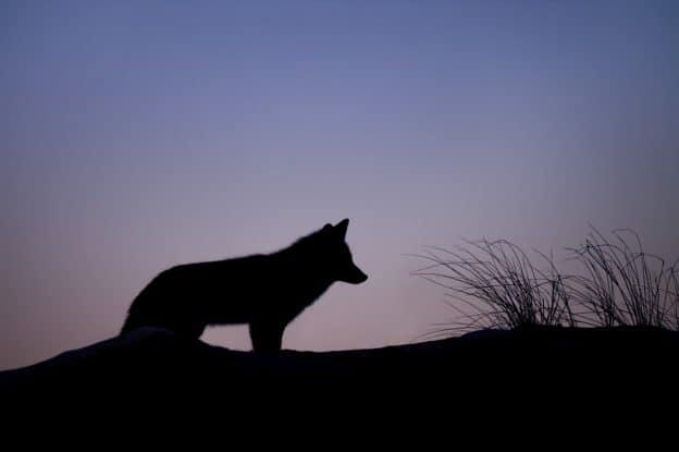 Les Esprits Animaux et Animal de Pouvoir