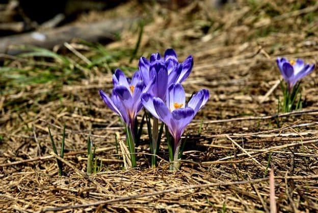 Le printemps, l'heure du renouveau !
